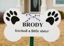 brody_dog_sibling