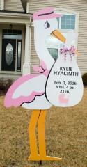 kylie_hyacinth